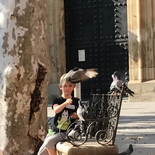 The Pigeon Whisperer