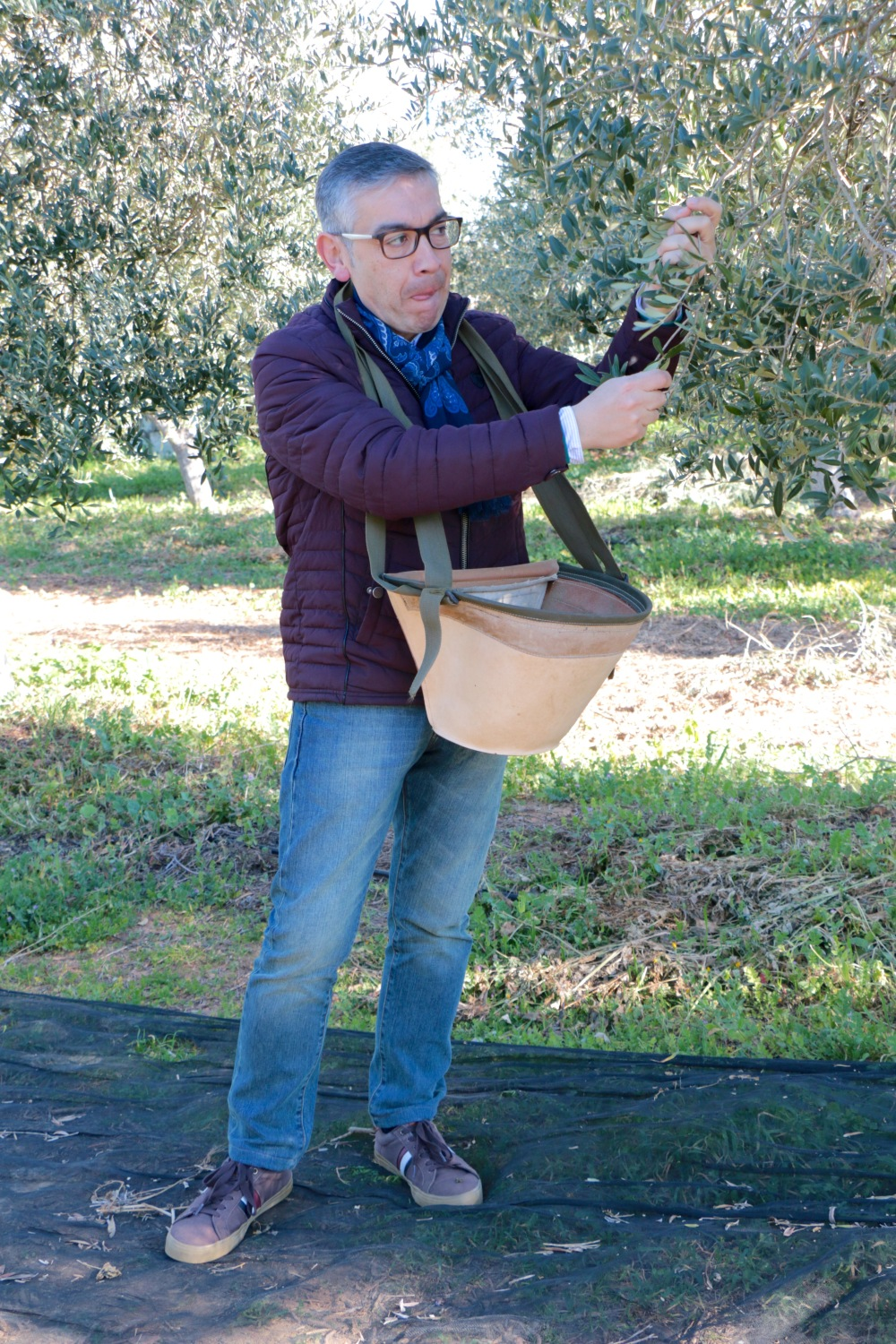 Little old Andrew picking olives